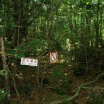 Aokigahara - The Suicide Forest Of Japan