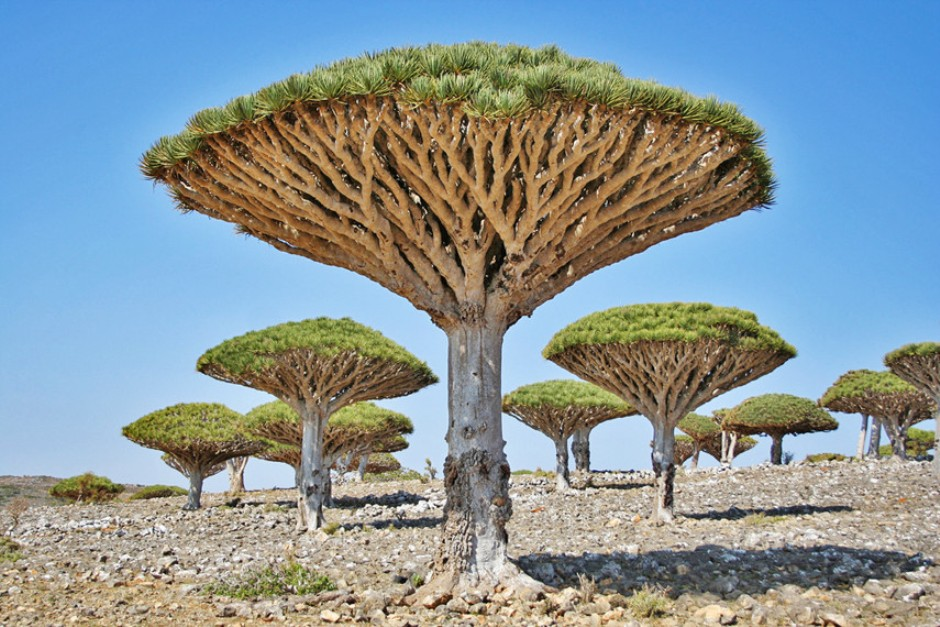 Dipo Ceremony Krobo Ghana additionally  as well Kummakivi Roca furthermore 2278459 moreover 10 Most Magnificent Trees In The World. on houses in turkmenistan