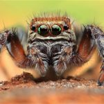 2 Most Mysterious And Unexplained Spiders