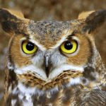 12 Mysterious Facts About Owls