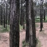 The Creepy Tales Of The Haunted Parallel Forest In Lawton, Oklahoma