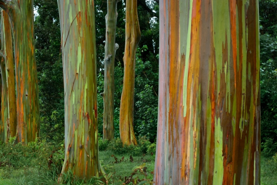 10 Most Magnificent Trees In The World