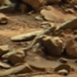 NASA Mars X Files May Have Revealed Alien Lifeforms On Mars
